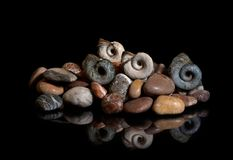 Sea stones, shells are isolated on a black background. In reflection royalty free stock image