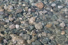 Sea stones under clear water Royalty Free Stock Images