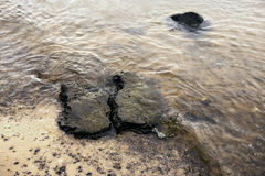 Sea stones in the water. Close up Stock Photography