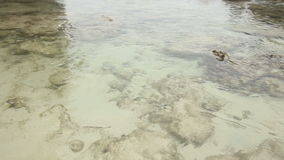 Sea Stony Coast with Very Transparent Water stock video footage