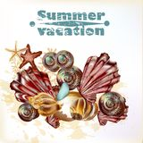 Sea summer background with vector detailed shells for design Stock Photo