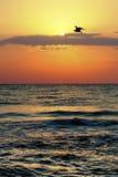 Sea sun and bird stock images