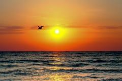 Sea sun and bird stock photo
