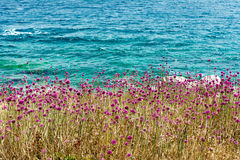 Sea and sun Croatian and purple flowers on the cliff: the island of St. Andrew.  royalty free stock images