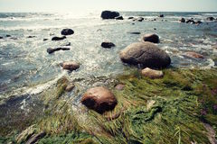 Sea with sun, rocks and algae Royalty Free Stock Images