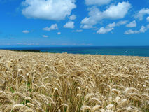 Sea, sun and wheat Stock Images