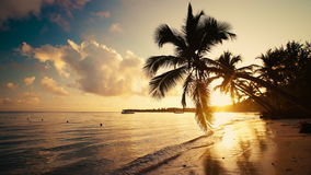 Sea sunrise on tropical island beach and palm trees Punta Cana Dominican Republic stock video footage