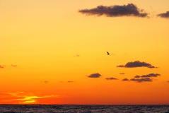 Sea sunset. Sea-gull against beautiful orange sunset Stock Photos