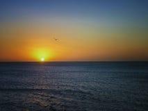 Sea Sunset and a Bird Royalty Free Stock Photos