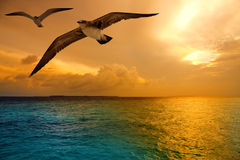 The sea, sunset and flying seagulls Stock Photo