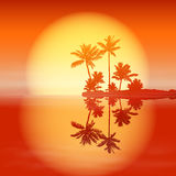 Sea sunset with island and palm trees. Royalty Free Stock Photos