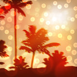 Sea sunset with island and palm trees Royalty Free Stock Photos