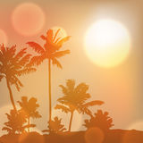 Sea sunset with island and palm trees Royalty Free Stock Photo