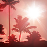 Sea sunset with island and palm trees Royalty Free Stock Image