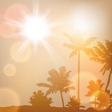 Sea sunset with island and palm trees Royalty Free Stock Photography