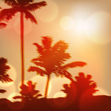 Sea sunset with island and palm trees Stock Photos