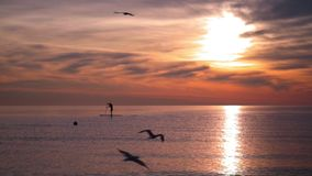 Sea sunset. Man sillhouette on surf board at sunset. Birds flying over sea stock video