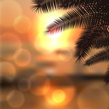 Sea sunset with palmtree leaves and light on lens Royalty Free Stock Images
