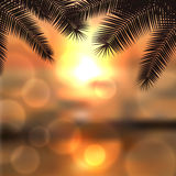 Sea sunset with palmtree leaves and light on lens Royalty Free Stock Photography