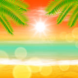 Sea sunset with palmtree leaves and light on lens Royalty Free Stock Photo
