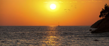 Sea sunset with silhouette of ship, seaguls and trees Stock Image