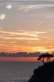 Sea sunset trees foreground royalty free stock images