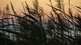 Sea Sunset View With Dry Grass stock footage