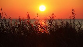 Sea Sunset View With Dry Grass stock video footage