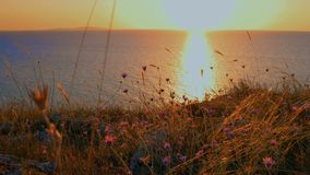 Sea Sunset View From Shore. With Dry Grass With Small Flowers stock video