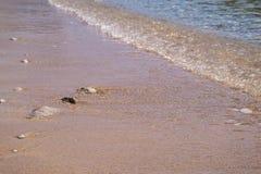 Sea surf on the sandy coast Royalty Free Stock Image