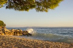 Sea surf on a stony beach with the pine. Sea surf on a stony beach. In the foreground, the pine branches are lighted by the setting sun stock photos