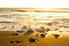 Sea surf  at sunset in  area  La Pared on Fuerteventura Royalty Free Stock Image