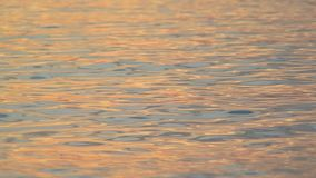 Sea surf with sunset light stock video footage