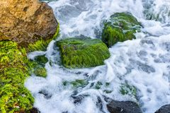 Sea surf, waves and rocks. Background. Royalty Free Stock Photo