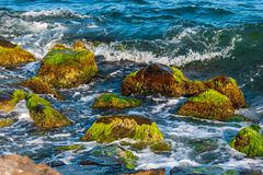 Sea surf, waves and rocks covered with algae. Close-up Royalty Free Stock Photos