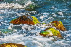 Sea surf, waves and rocks covered with algae. Close-up Stock Photography