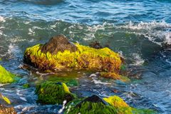 Sea surf, waves and rocks covered with algae. Close-up Royalty Free Stock Photography