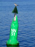 Sea swallow on buoy Royalty Free Stock Photo