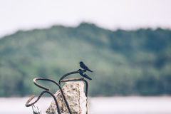 Sea swallows perched on pole. Royalty Free Stock Images