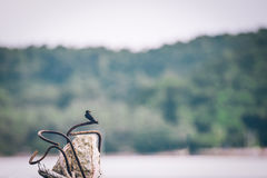 Sea swallows perched on pole. Stock Images