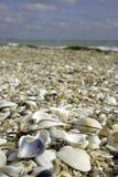 Sea texture Royalty Free Stock Photo