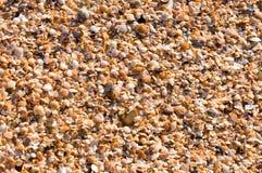 Sea Theme. Background Royalty Free Stock Image