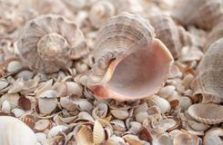 Sea theme background with shells scattered close-up. Sea shell collection. Seashells background royalty free stock image