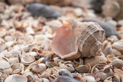 Sea theme background with shells scattered close-up. Sea shell collection. Seashells background stock image