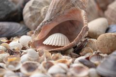 Sea theme background with shells scattered close-up. Sea shell collection royalty free stock photo