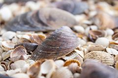 Sea theme background with shells scattered close-up. Sea shell collection. Seashells background royalty free stock photos