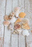 Sea theme border background with nseashell on  white vintage wooden boards Royalty Free Stock Photo