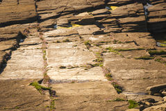 Sea Thrift. Armeria maritima, growing in the cracks in the rock on the coast in Orkney Stock Image