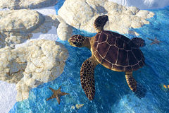 Sea Tortoise Entering Land Royalty Free Stock Photography