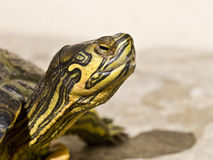 Sea tortoise Stock Images